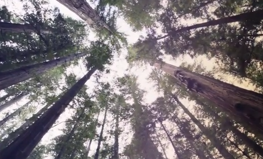 Growing is Forever: A Poem for The Redwoods