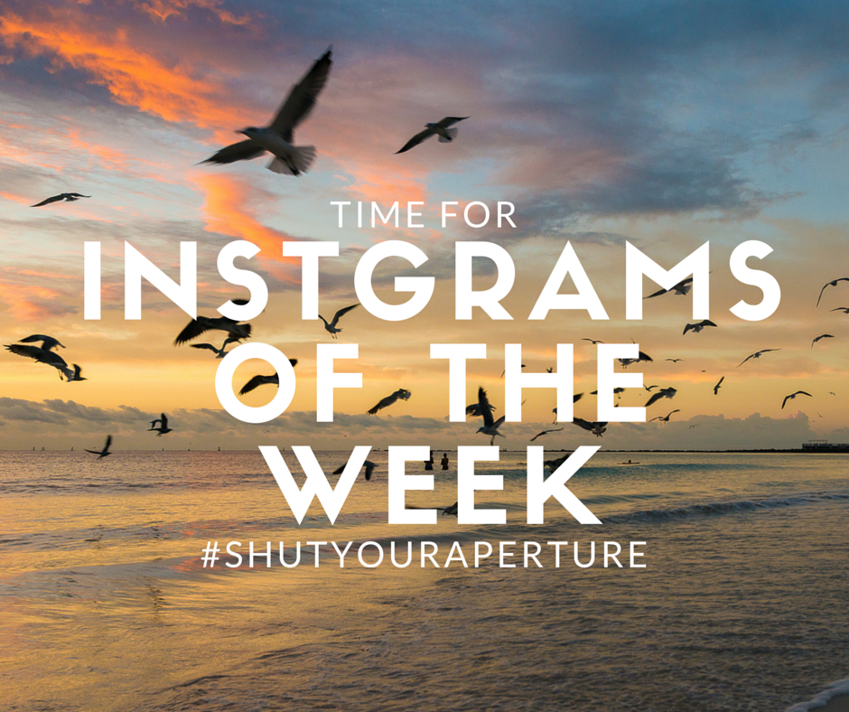 Instagrams of the week